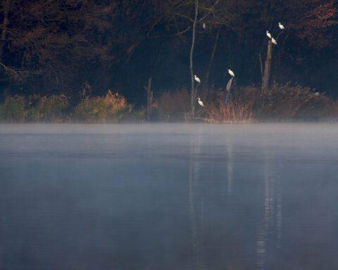 """La foto vincitrice della prima edizione del concorso fotografico """"Un territorio da vivere - Avigliana, il suo Parco e la Collina Morenica"""", autore Marco Millotti, titolo """"Aironi sul Lago Grande"""""""